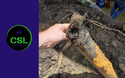 How Tree Roots Can Damage Pipes